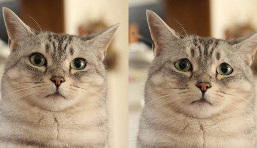 うちのチーを話題の「悲しい猫」にしてみた