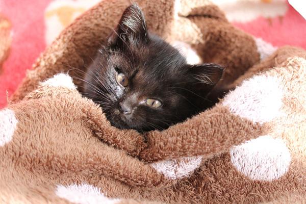 黒猫四女「ジジ1歳」のプロフィール詳細
