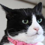 4猫長女キキのプロフィール