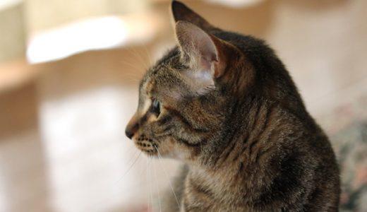 4猫三女マロンのプロフィール
