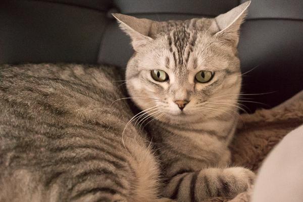 α7SのISO80000で撮ったうちの猫チーの写真