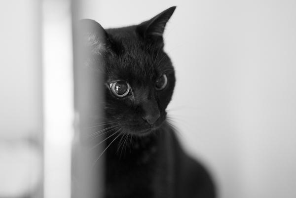 α7SのISO10000で撮ったうちの猫ジジの写真
