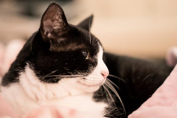 α7SのISO10000で撮ったうちの猫キキの写真