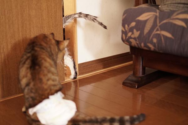 戸を開けたチーを追いかけるマロン