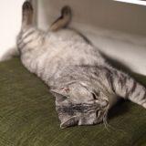 チーはお気に入りの座布団の上でお昼寝