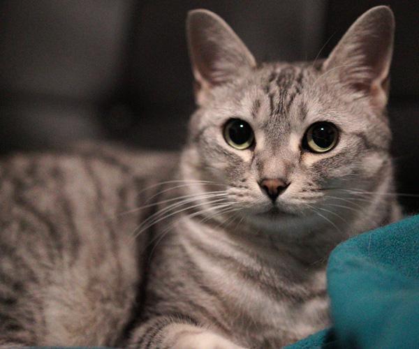 α7sのISO20000で写したうちの猫チーの写真
