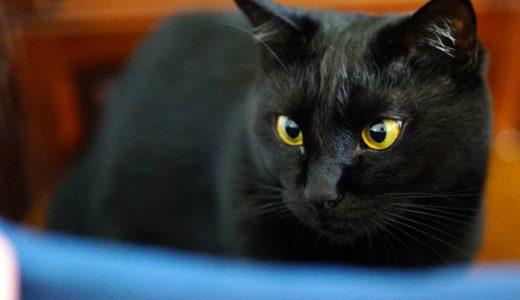 α7sの高感度撮影でうちの猫を撮ってみた