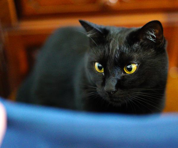 α7sのISO10000で撮影した猫のジジの写真