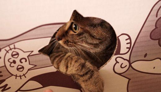 charmオリジナルつめとぎネコハウスぐんまちゃんとハイチーズキャットマンを買ってみた