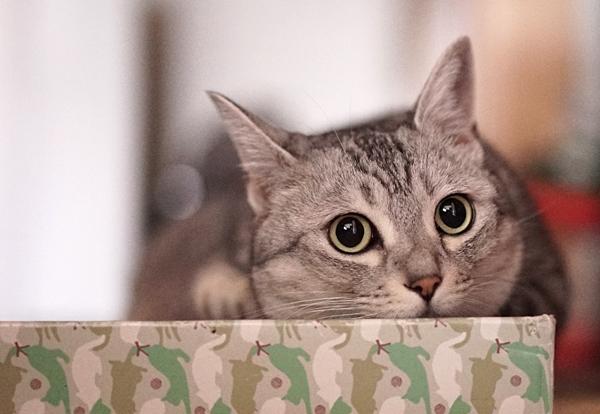 超高感度のα7sで黒目クリクリの猫写真を撮ってみる