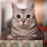 超高感度のα7sで綺麗に猫の写真を撮る