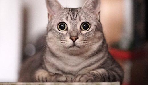 超高感度のα7sで黒目クリクリの猫写真を撮ってみた