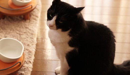 ボケてきたっぽい猫のキキは人間で言うと80歳