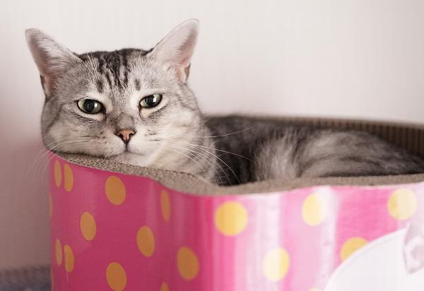 「キャットスクラッチャータブ」を気に入った猫は?