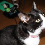 猫にフラッシュ焚いてのカメラ撮影は厳禁らしい