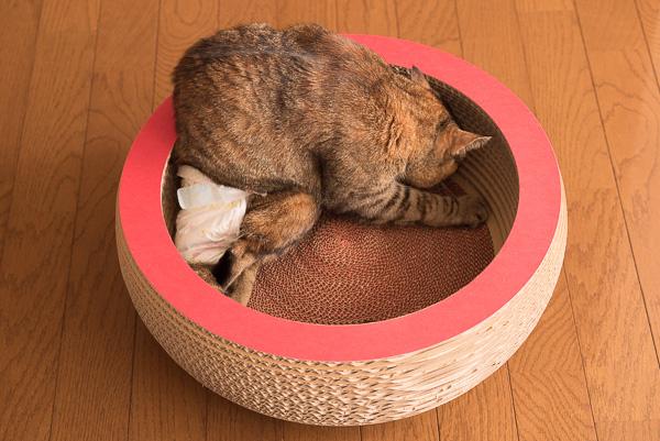 段ボール職人の猫用キャットベット・キュートボールに入るマロン