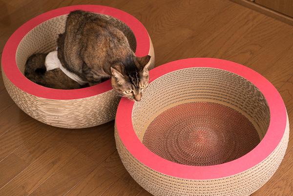 キャットベット・キュートボールに入ってくる猫待ちのマロン