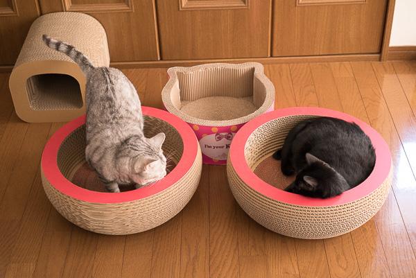 段ボール職人の猫用キャットベット・キュートボールに入るチーとジジ