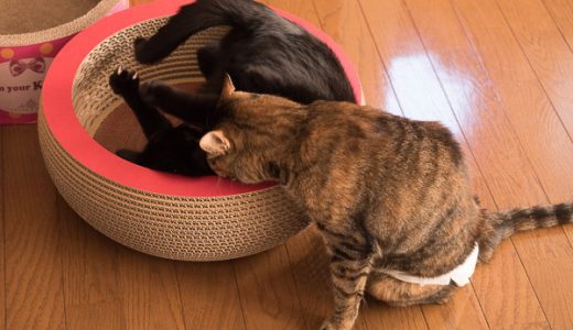 FZ1000の4K動画でうちの猫のマロンとジジを撮ってみました