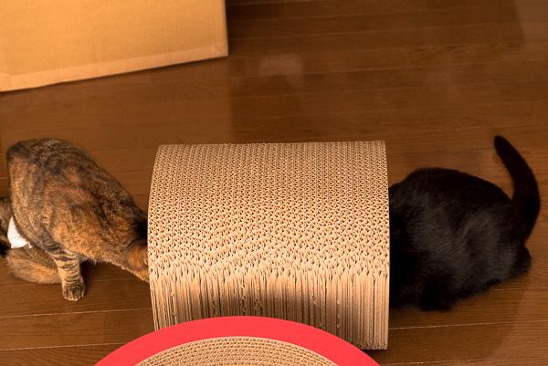 ダンボール職人のマンクスで遊ぶ猫たち