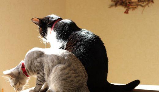 猫に首輪を止めた理由