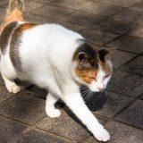 毛並みが綺麗な捨て猫