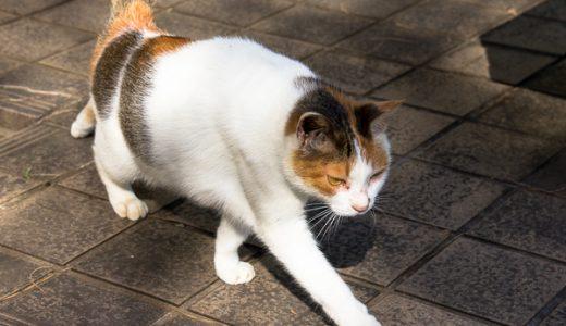 山の中の捨て猫の様子をまた見てきたら