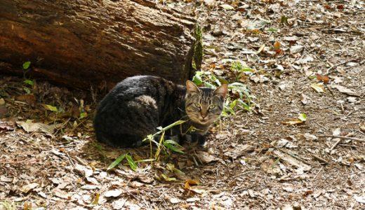 山の中の捨て猫たちと会えなくなった