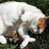 山の中の捨てられている野良猫ちゃんに再会!