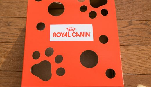 ロイヤルカナンのおまけで付いてきた「猫じゃらしBOXセット」で遊んでみた