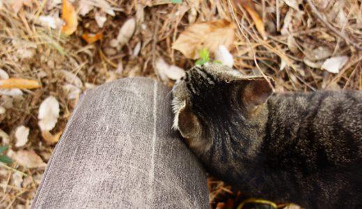 山の中に捨てられている3匹目の野良猫ちゃん