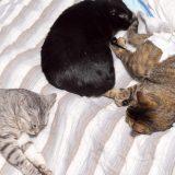 電磁波を発生する電気毛布は猫に体に悪いの?