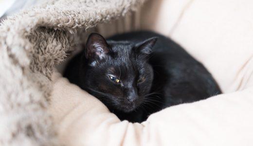 ミュッターの犬用ベッドに入るようになったうちの猫たち