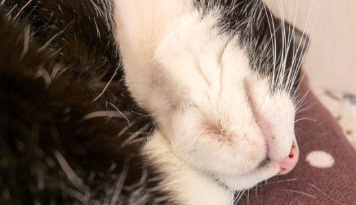 16歳で初めて出来たキキの猫アクネ(ニキビ)
