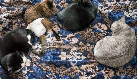 猫の多頭飼いで困る事-猫達の相性(キキとチーの場合)について