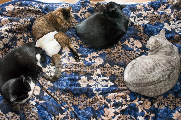 冬季限定!4猫勢揃い