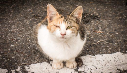 野良猫の子猫たちの逞しい姿に感動!!