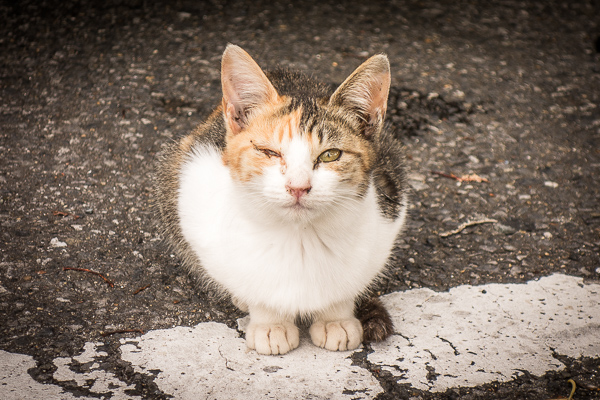 かみね動物園の上の駐車場に捨てられていた子猫