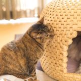うちの猫たちが関川村の「猫ちぐら」に全く入らなくなった理由