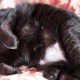 避妊手術から数年経っても猫のお腹から毛が生えて来ないのだが?