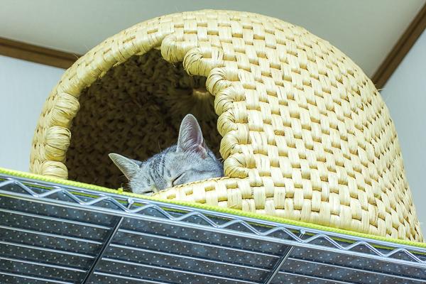 以前は確かに入っていた関川村の「猫ちぐら」