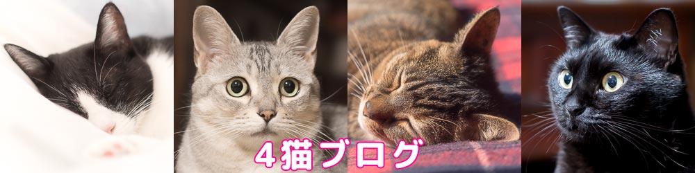 4猫ブログ